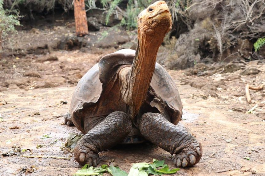 (Twitter/Parque Galapagos)